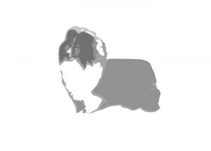 asturshelkie_shelties_logo
