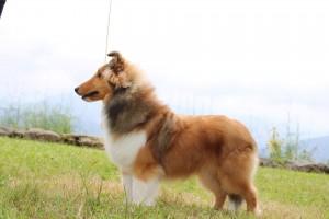 Foto de cachorro, pendientes de actualizar