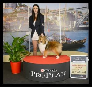 porto_puppy_winner