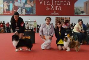 Foto: Beatriz Hermo BOB (left): Final Countdawn de Medina Mayurca BOS (right): Leigh-hi's Madmoiselle