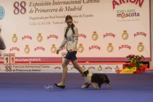 asturshelkie_shelties_exp_madrid
