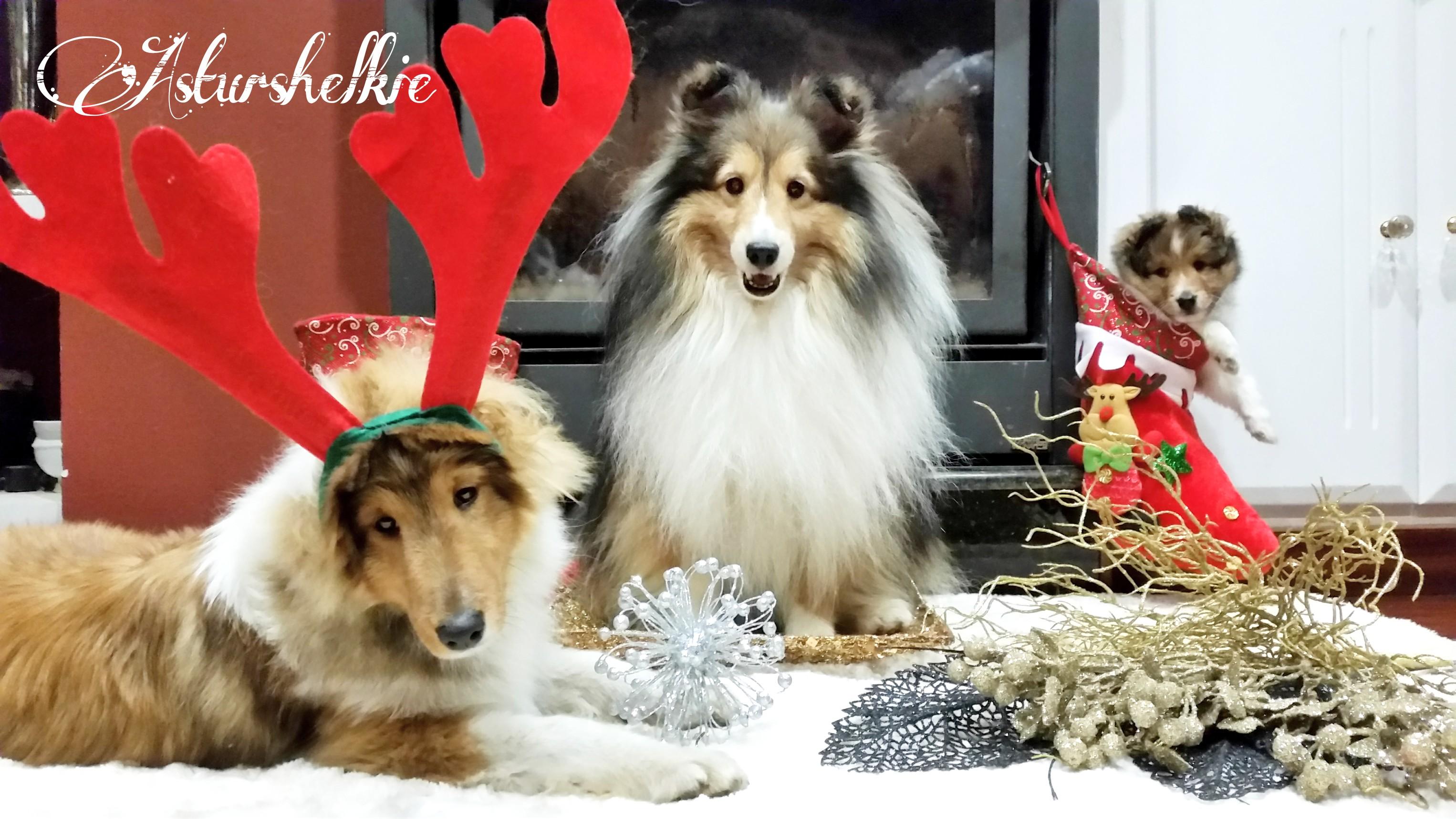 asturshelkie_christmas_navidad