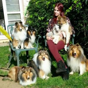 asturshelkie_kennel_shetland_sheepdog
